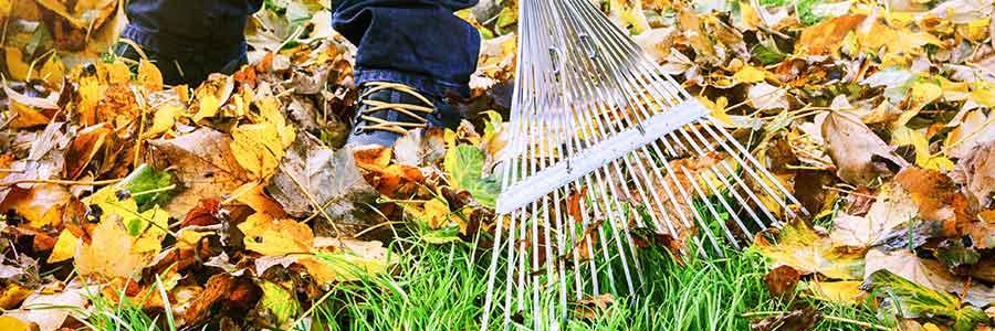 Najaarsonderhoud in de tuin - blad ruimen